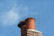 Find a Chimney Sweeps in London